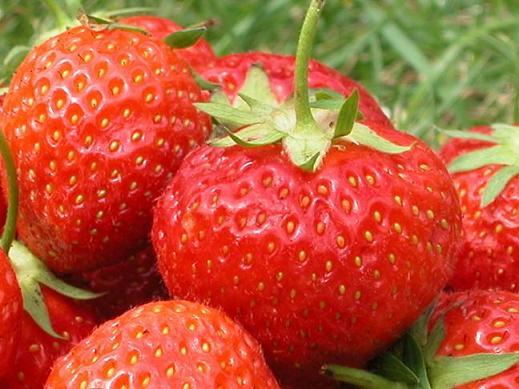 D lice de fraises au fromage blanc epicuria la cuisine au quotidien - La cuisine au quotidien ...