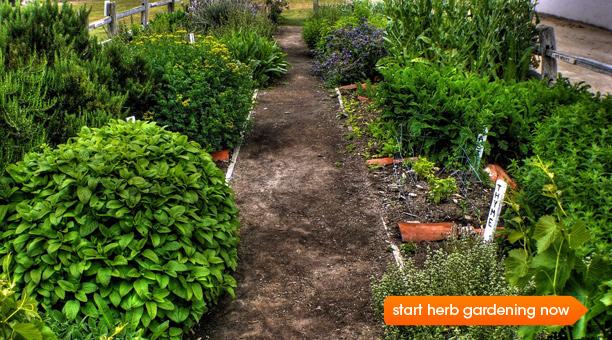 Growing A Kitchen Herb Garden Epicuriouscom