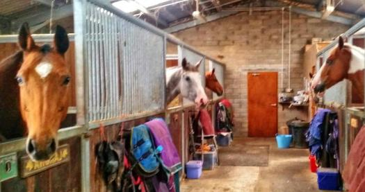 Pony Horse Stables