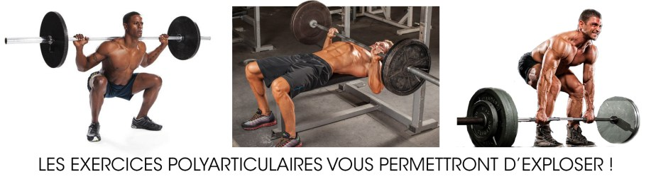 exercices polyarticualires programme musculation debutant
