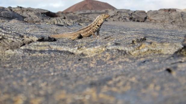 Galapagos-Equateur-rêve-croisière 2