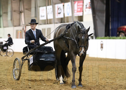 Behind the Scenes at 2017 QH Congress- 10/17-10/18 Equine Chronicle