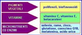 antiossidanti3