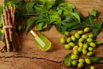 l-olio-di-neem-proprieta-e-benefici-di-un-potente-alleato-per-la-bellezza-500