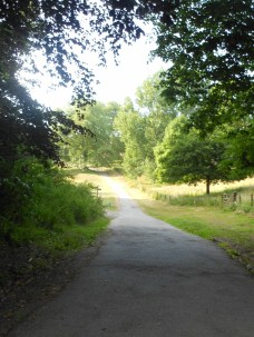 Saltram - path