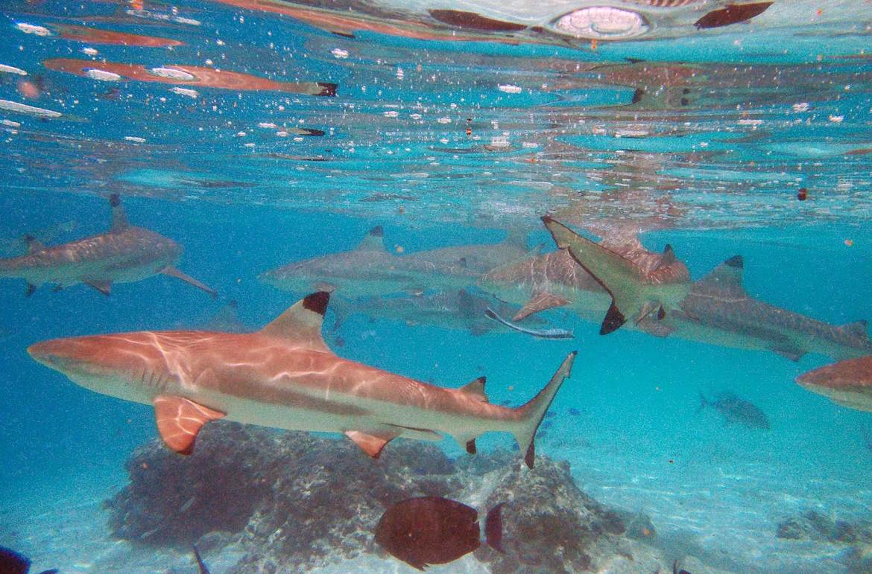 Snorkel em Moorea - O que fazer na Polinésia
