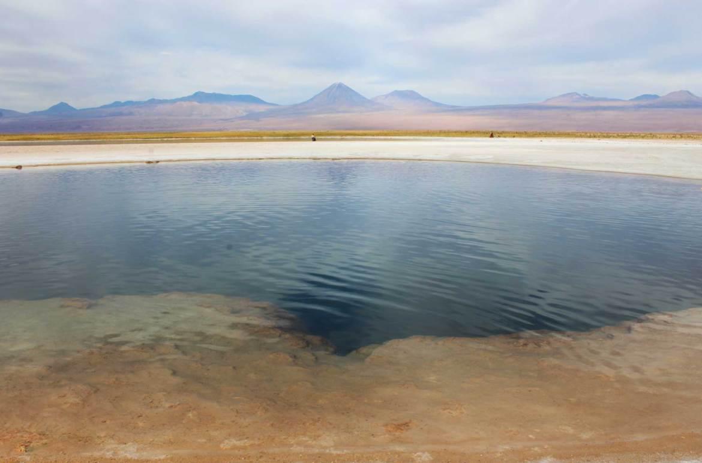 O que fazer no Atacama - Laguna Cejar