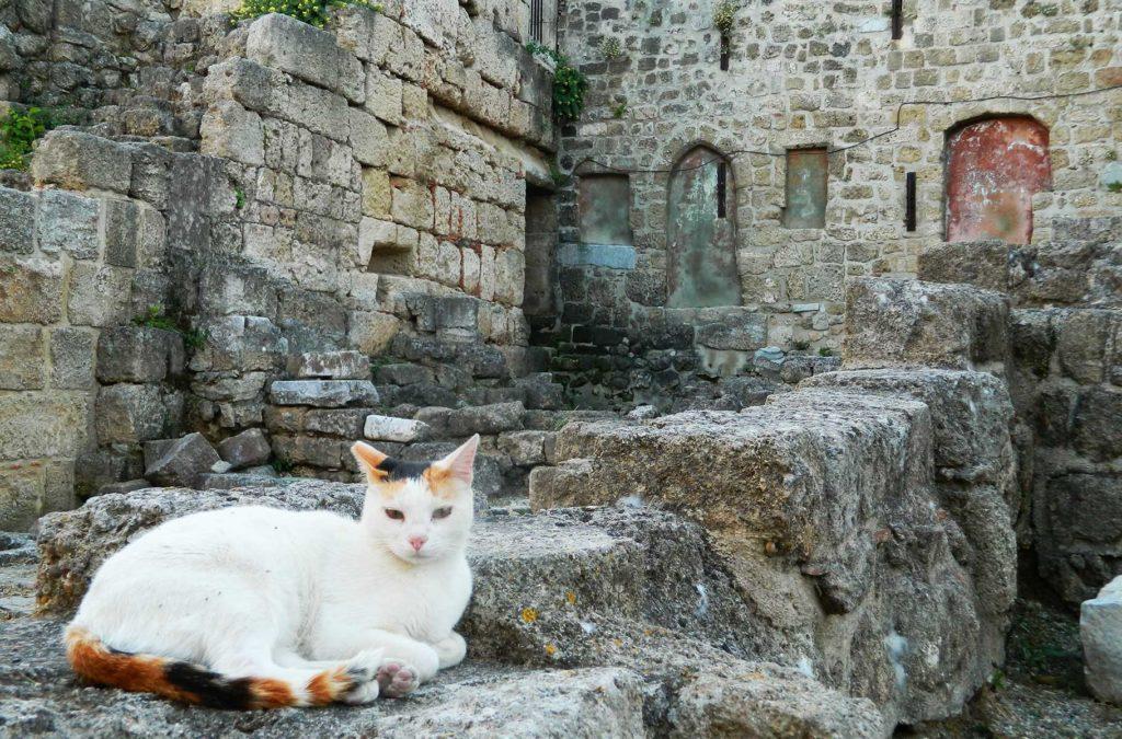 Dicas da Grécia - Gatos por todos os lados
