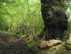 Ruta de Bárcena Mayor a los Tojos