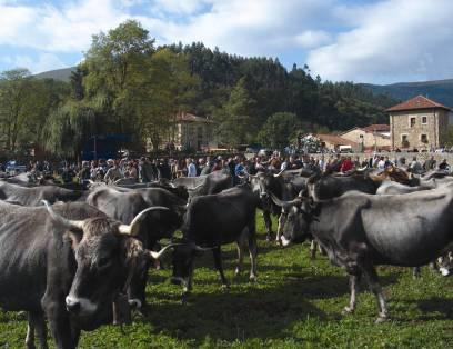 Feria de ganado en Valle