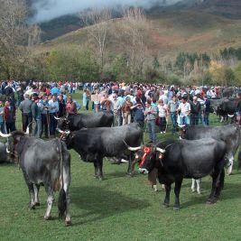 Feria de ganado en Ruente