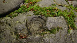 Fósil de ammonite