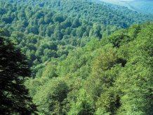 Bosque de Saja