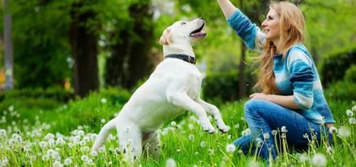 cómo entrenar un perro