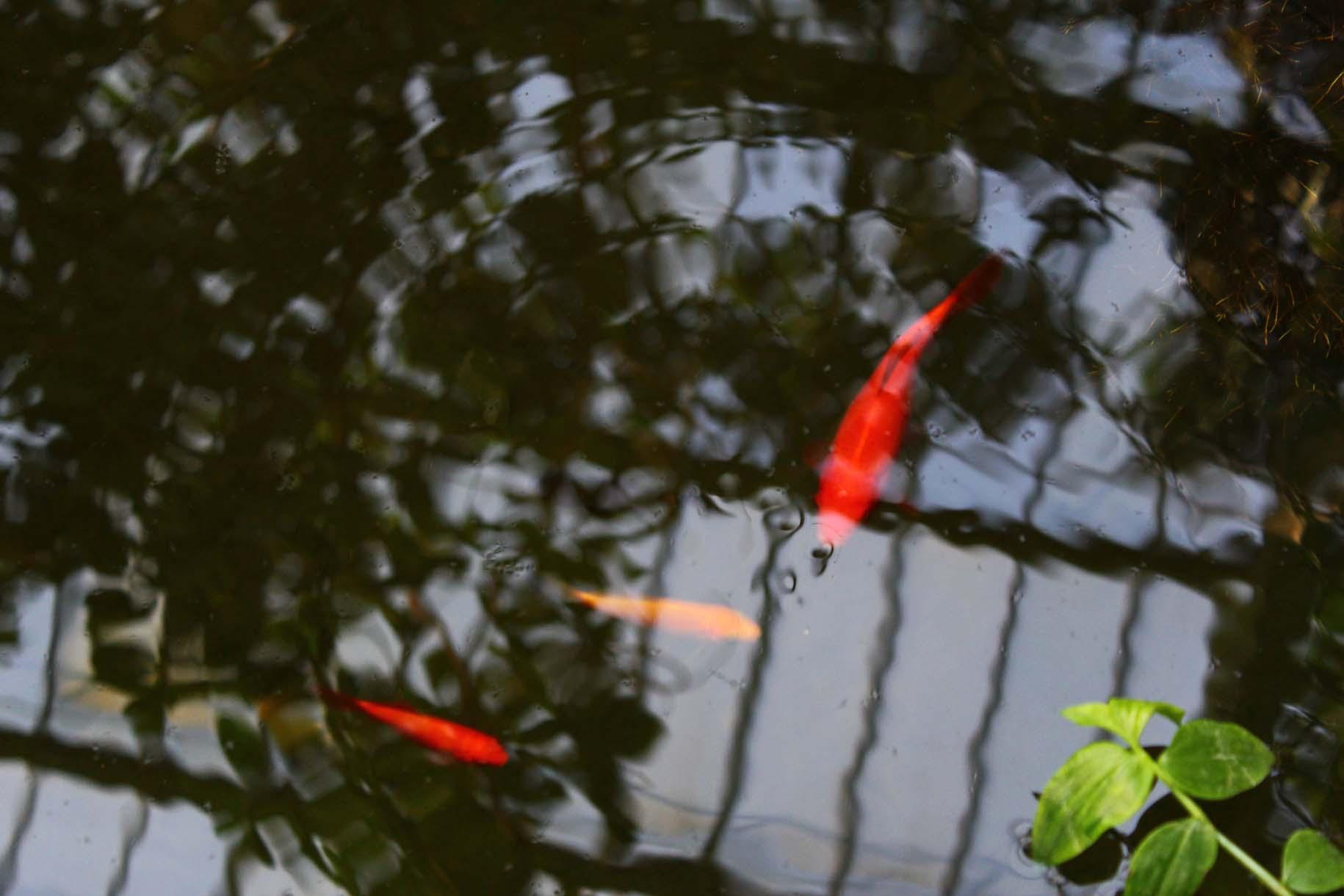 Sous les tropiques des grandes serres, jardin des plantes  esperluette