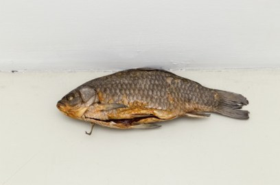 Luca Francesconi, Fish, 2014, carassius dried, resin