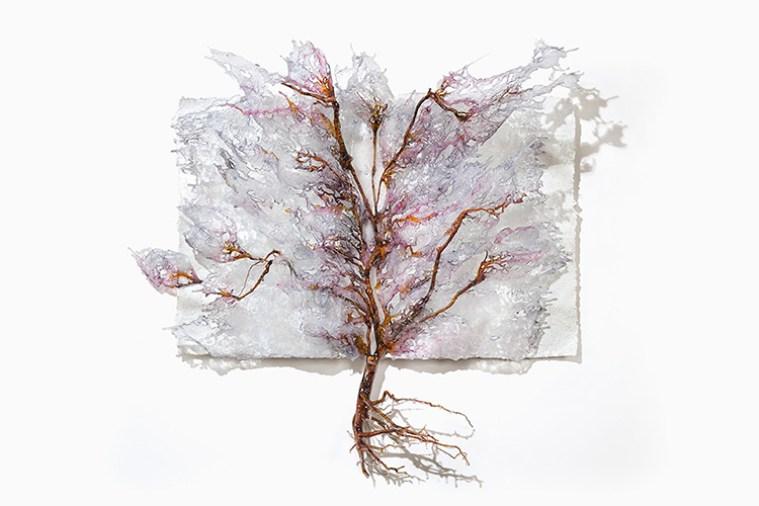 ANNALÙ, PESACH, 2017, Vetroresina, inchiostri, radici, 65 x 70 x 20 cm
