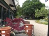 Beth Chatto Gardens (11)
