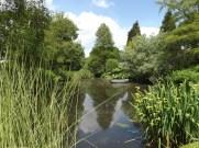 Beth Chatto Gardens (15)
