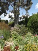 Beth Chatto Gardens (2)