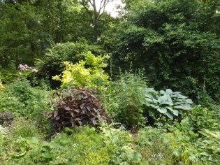 Beth Chatto Gardens (32)