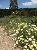 Beth Chatto Gardens (49)