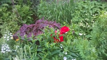 Feeringbury Manor Gardens (10)