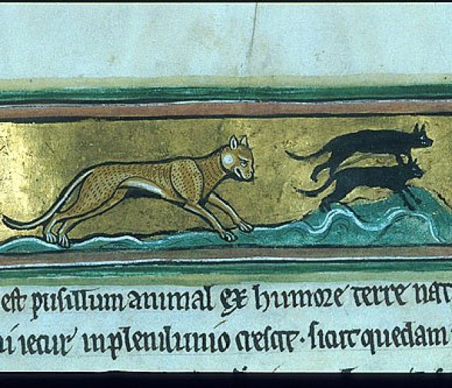Royal 12 F XIII f. 43 Cat