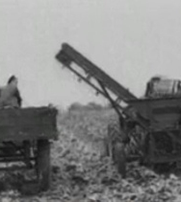 Sugar Beet harvesting in 1948