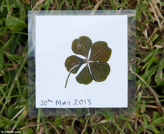 five_leaf_clover_2