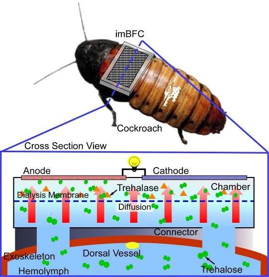 cyborg-cockroach-wireless-sensor-network