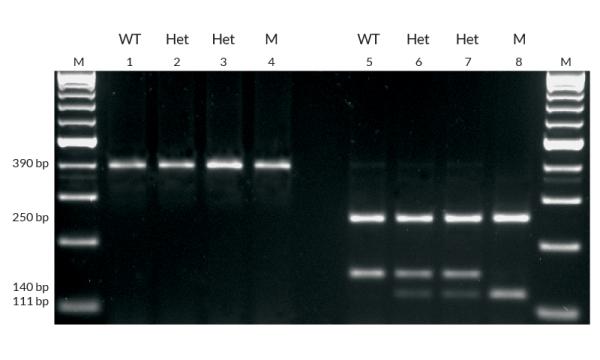 Se você curte genética, vai adorar as aulas práticas, principalmente quando você aprender a realizar o PCR. É demais!