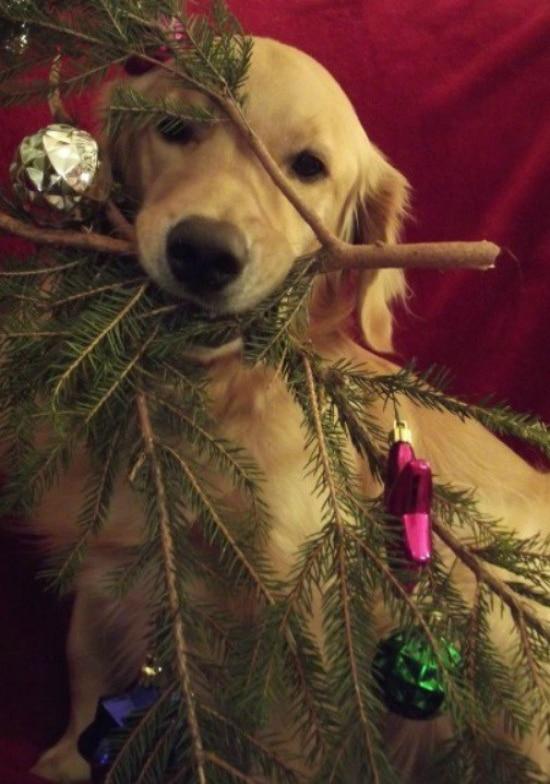 Cute Funny Puppies Wallpapers Mascotas En Navidad Las M 225 S Traviesas Y Gamberras
