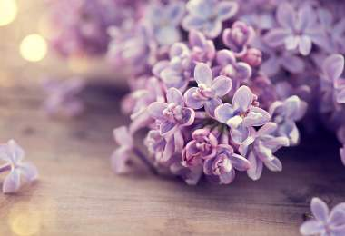 Lilac spring flowers bunch over wooden background. Easter, beautiful violet Lilac flower border design closeup. Wood. Copy space for your text