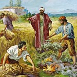 Evangelio San Mateo 13,24-30. Sábado 23 de Julio de 2016. Misa de Santa María en Sábado.