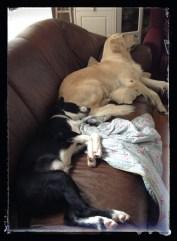 To som har sovnet!