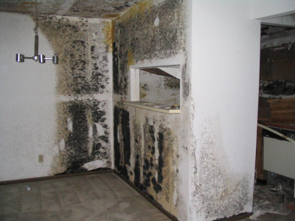 Toxic Black Mold Poisoning | Everdry Grand Rapids