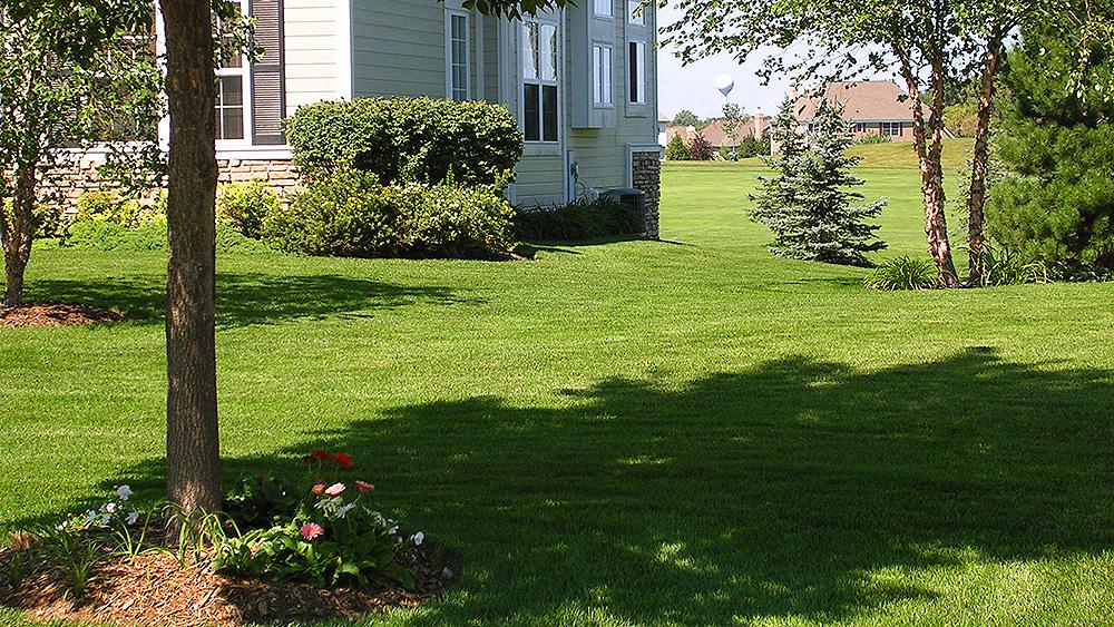 Lawn  Landscape Maintenance Sample 1 - Evergreen Landscape - sample lawn and garden