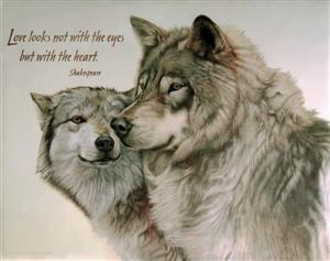 Lone Wolf Wallpaper Quote Love Looks Wolf Poster
