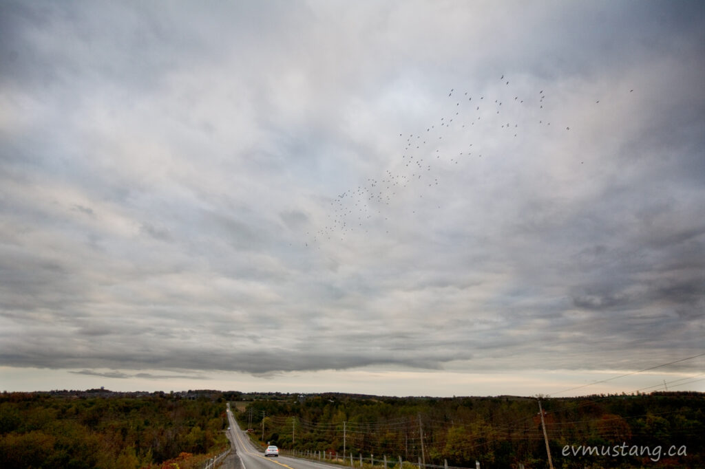 image of a flock of pigeons flys on a cloudy day