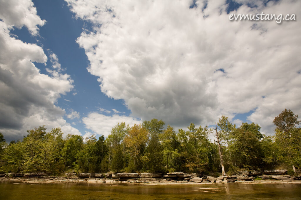image of trees on the bank along crowe river