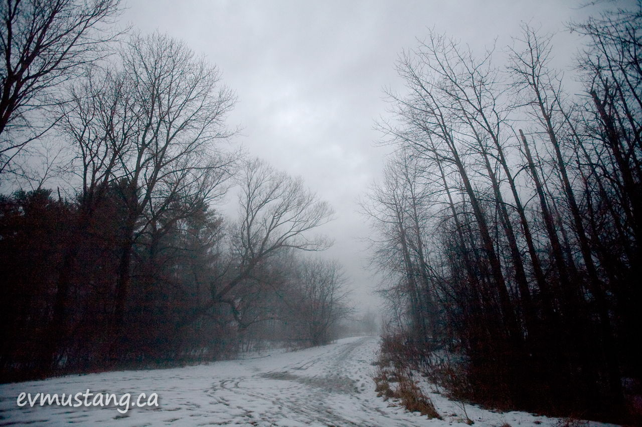 image of forest path with fog