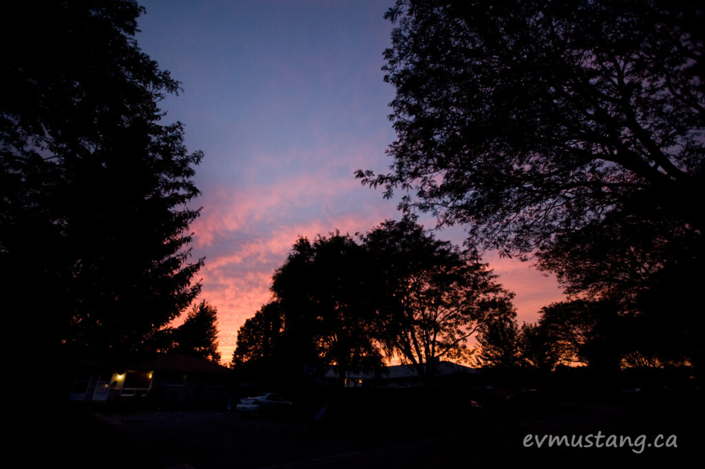 image of suburban trees silhouetted against a sunset