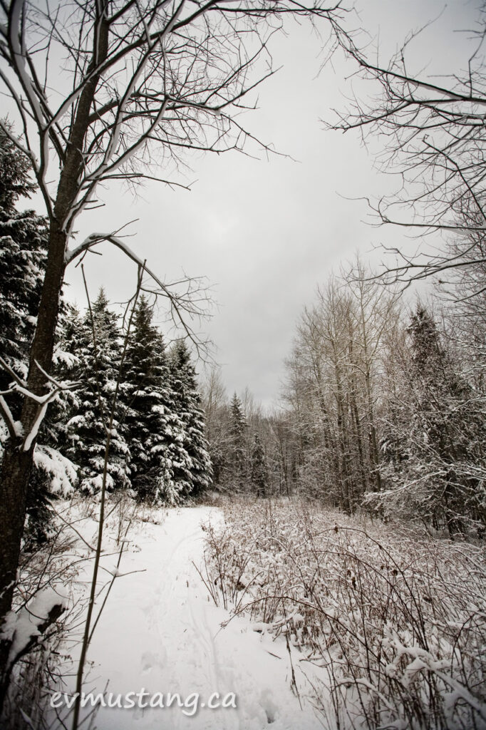 image of a path through the woods in winter