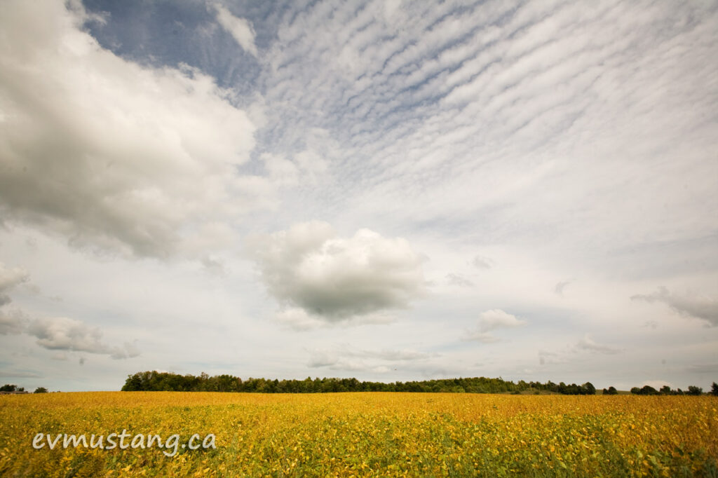 image of soy field under late summer clouds south of peterborough, ontario