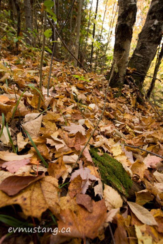 image of autumn leaves on forest floor