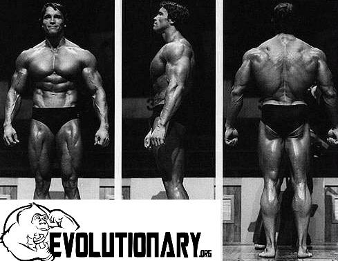 Arnold Schwarzenegger Wallpaper Quotes Arnold Schwarzenegger My Olympia Posing Evolutionary Org