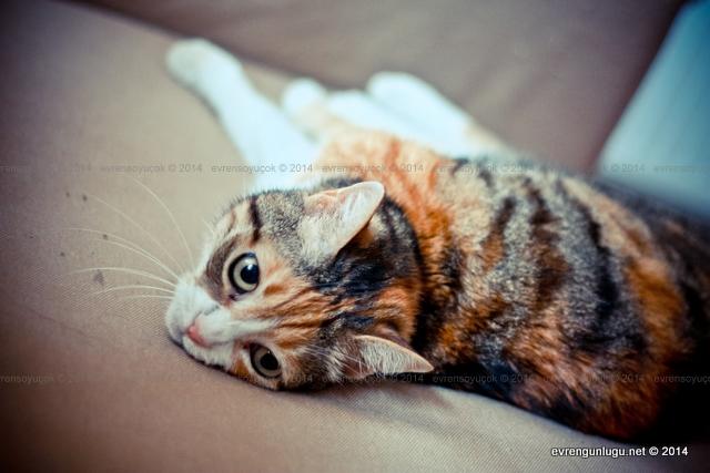 Fethi Naci'nin kedisi