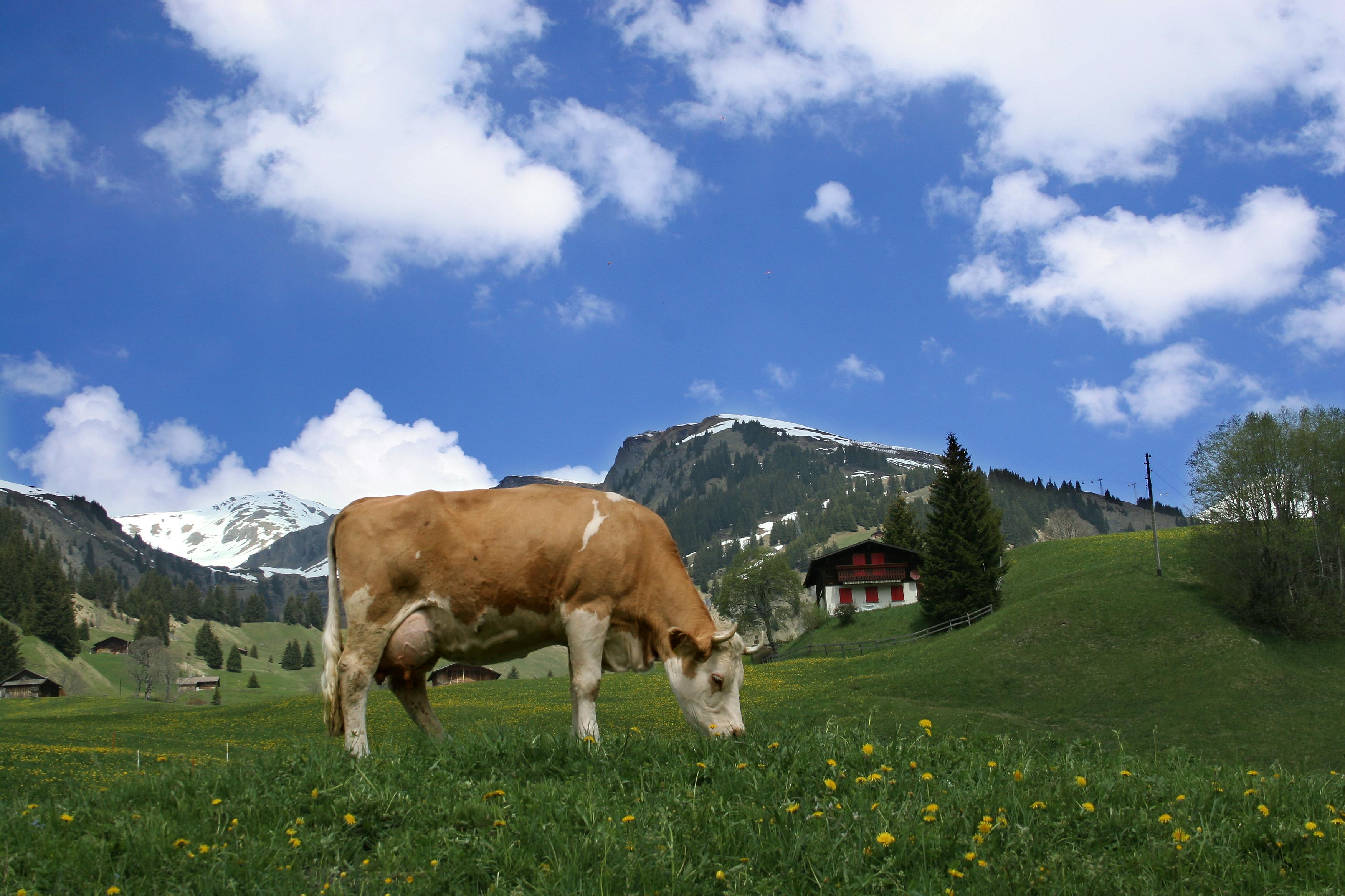 postuler en suisse cv