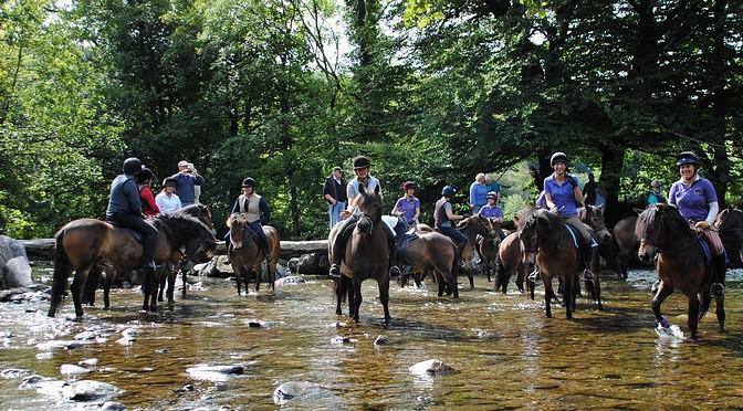 exmoor pony festival